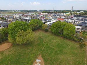 大きな木ときれいな芝生広場です。