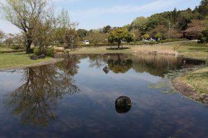 晴れた日には、石の上で亀が甲羅干しをしています。魚もたくさんいます。