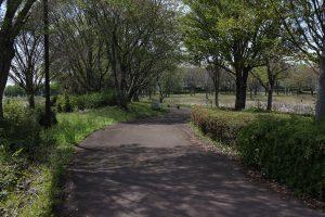 平日の昼休みや休日には、散歩する人で賑わいます。
