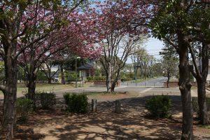 入口のレンガの塀と八重桜が優しく迎えてくれています。一度立ち寄ってみてくださいね。