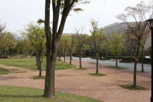 「つくば公園通り」赤塚公園から筑波大学に南北につながる約5kmのペデストリアンデッキ