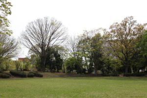 芝生をはじめ園内はきれいに手入れされています。