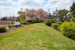 ピンクの桜と緑のこんもりとした丘が美しいです。