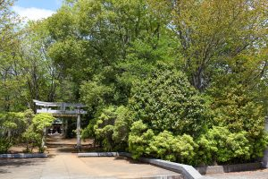 緑の木々に囲まれて隣接する鹿島神社
