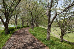公園のまわりの歩道は、桜のトンネルや新緑の中のお散歩を満喫できます。