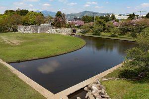 静かな池には魚がたくさんいました。