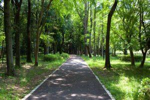 洞峰公園を後にして、つくば公園通り(ペデストリアンデッキ)に戻り、赤塚公園を目指します。