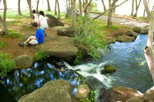 小川が流れる木陰は、暑い日には気持ちがいい。