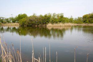 浮島のあるとても穏やかな池です。