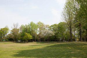 若葉の香り、優しい木漏れ日。大地のエネルギー感じます。