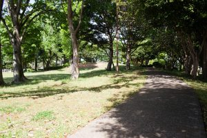 木漏れ日の中の散歩は心弾みます。