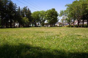シロツメクサの真っ白なじゅうたん。土の匂いをかぎながら歩くと気持ちがいいです。