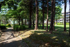 木陰の散歩道。